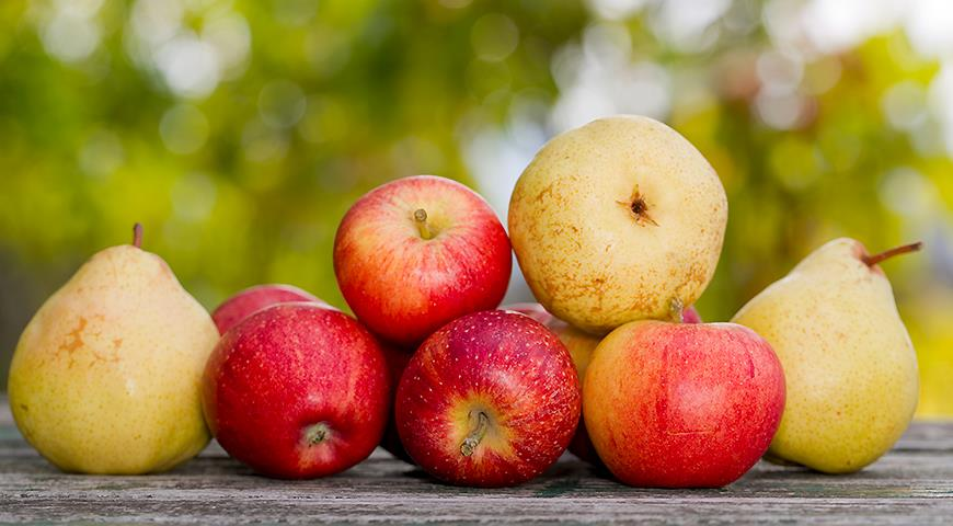 Чем подкормить яблоню и грушу осенью для богатого урожая