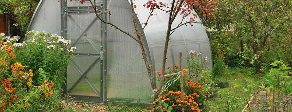 Что нужно сделать в сентябре в саду и огороде, чтобы правильно завершить сезон
