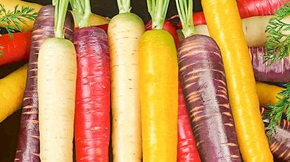 5 способов посеять морковь: самые проверенные методы