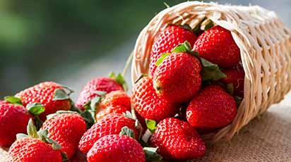Чем можно подкормить клубнику весной и в начале лета для хорошего урожая