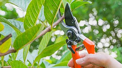Главные правила обрезки плодовых деревьев и кустарников