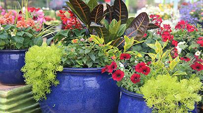 Как сохранить контейнерные растения зимой и уберечь их от морозов