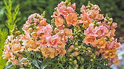 Какие цветы можно сеять зимой: ТОП-6 сортов