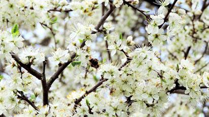 Весенняя подкормка яблонь: какие удобрения внести перед цветением