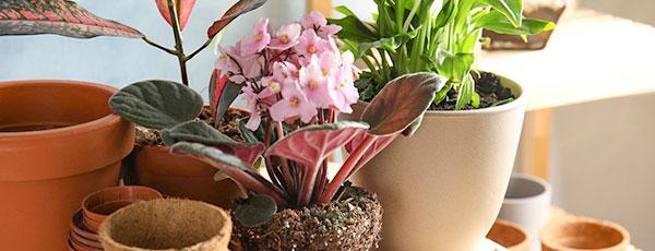Цветы дома из семян — очень просто и недорого