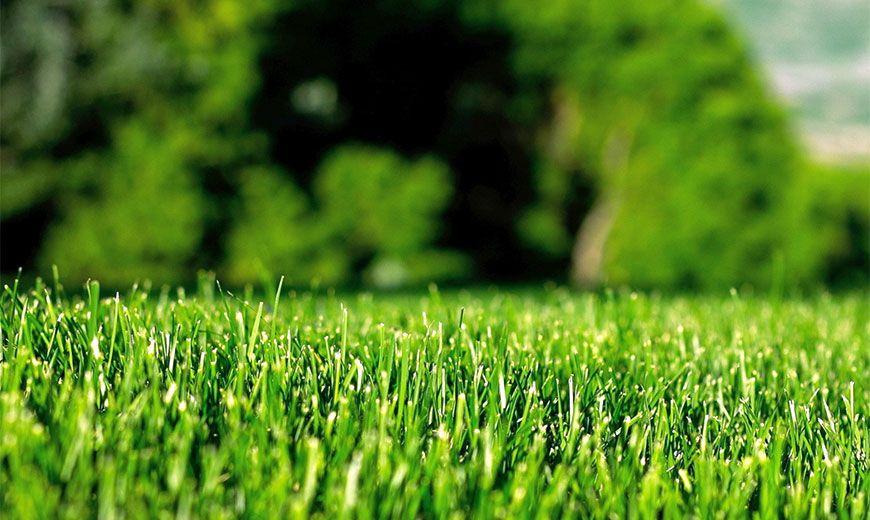 Как ухаживать за газоном летом: секреты изумрудной лужайки