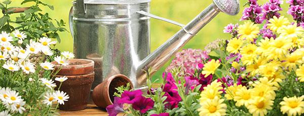 Календарь садовода и огородника на июль 2021: 30 важных дел