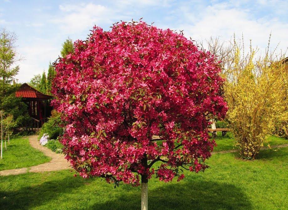 Обрезка яблонь осенью: полезные советы и схемы для начинающих