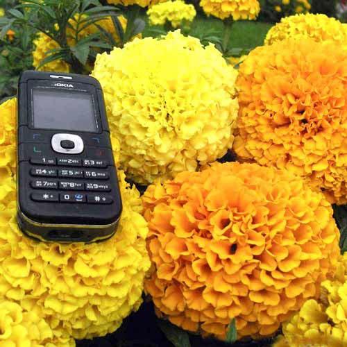 Бархатцы Русский Размер F1, смесь окрасок Русский огород НК изображение 1 артикул 66197