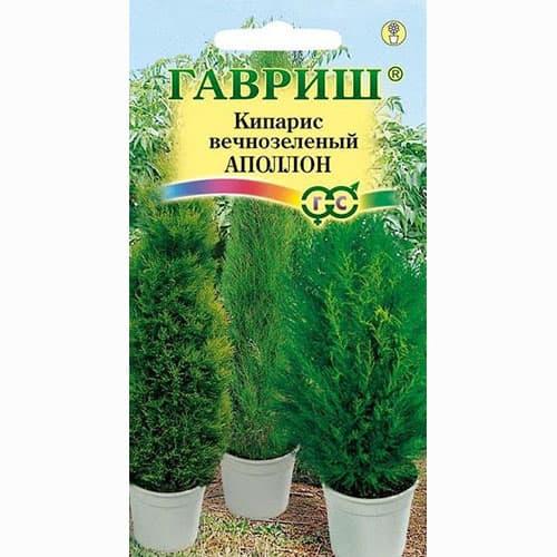 Кипарис вечнозеленый Аполлон Гавриш изображение 1 артикул 66078