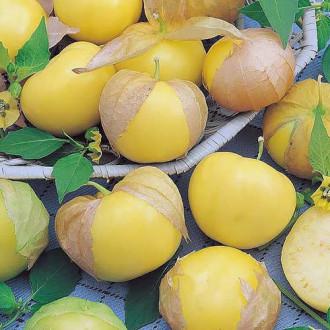 Физалис овощной Королек Седек изображение 2