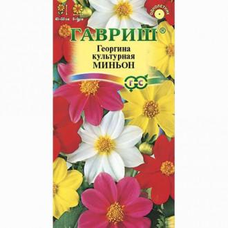 Георгина Миньон, смесь окрасок Гавриш изображение 1