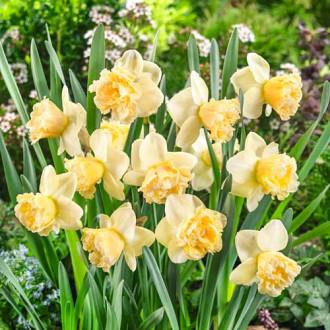 Нарцисс крупноцветковый Арт Дизайн изображение 6