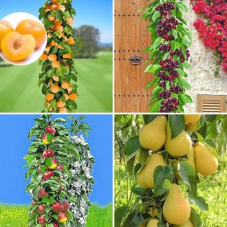 Суперпредложение! Комплект колоновидных деревьев Покорение Сибири из 4 саженцев изображение 4