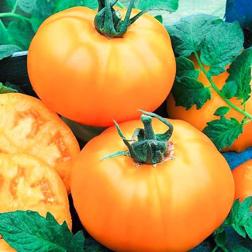 Томат Сахар оранжевый Седек изображение 1 артикул 65172