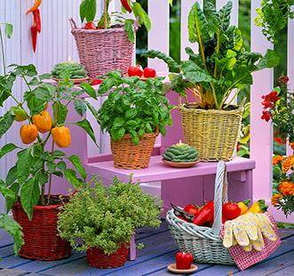 Семена овощей Профессиональная серия
