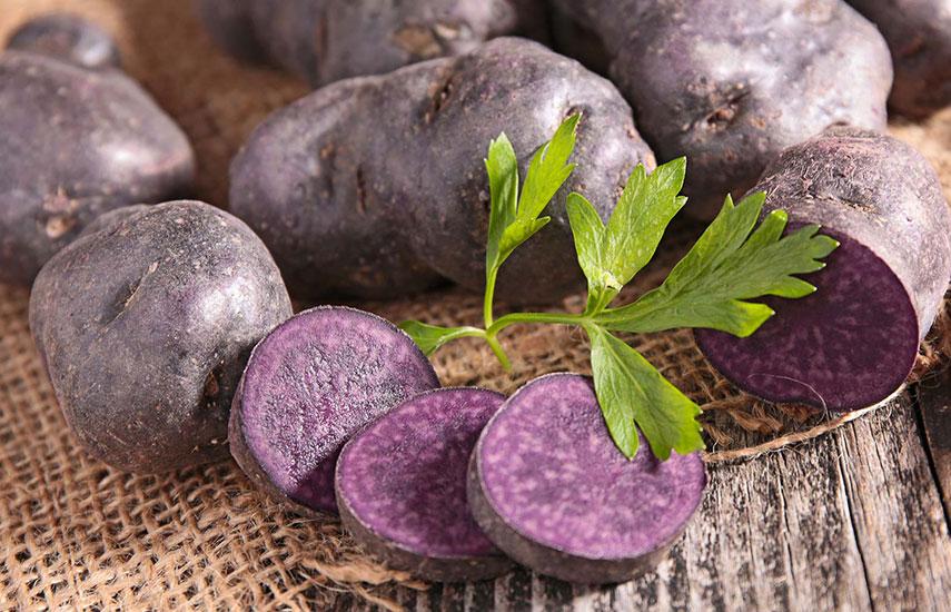 фиолетовый картофель выращивание