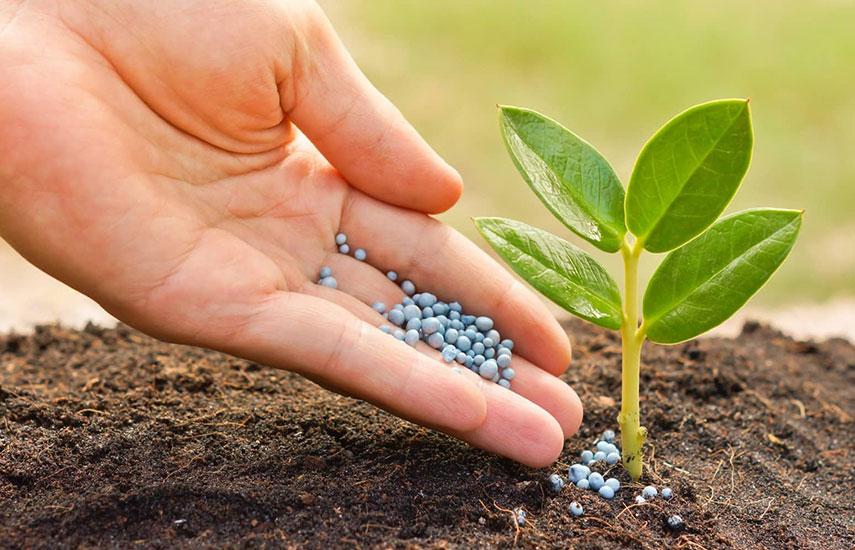 Виды удобрений и способы внесения