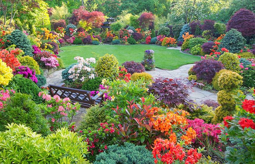 посадка кустарников при планировании сада