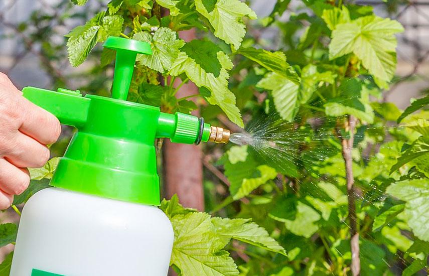 чем обработать сад весной
