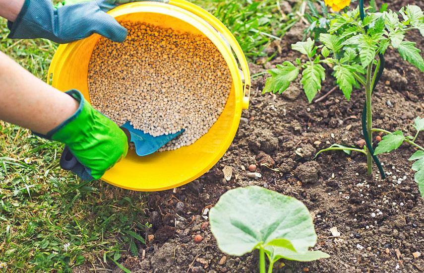 Чем подкормить кустарники весной