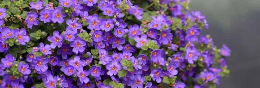 ампельные растения для сада фото 5