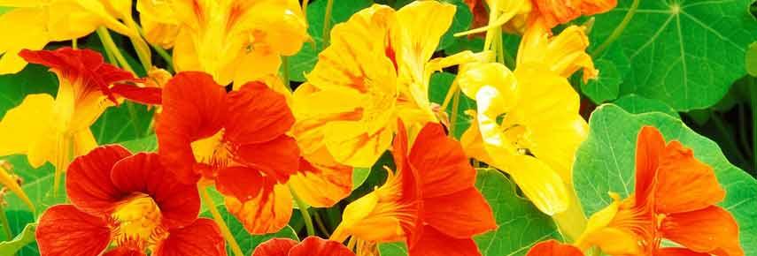 ампельные растения для сада фото 8