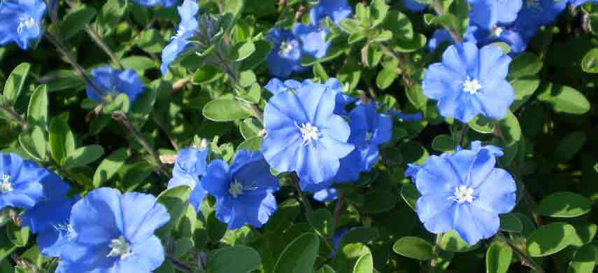 ампельные растения для сада фото 9