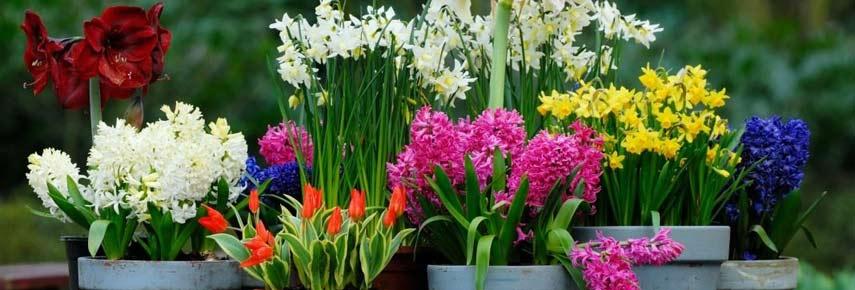 цветы к новому году