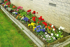 Виды цветников фото 4