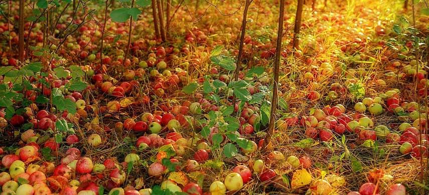 что сделать в саду осенью