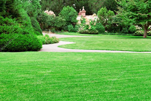 летний газон фото 4