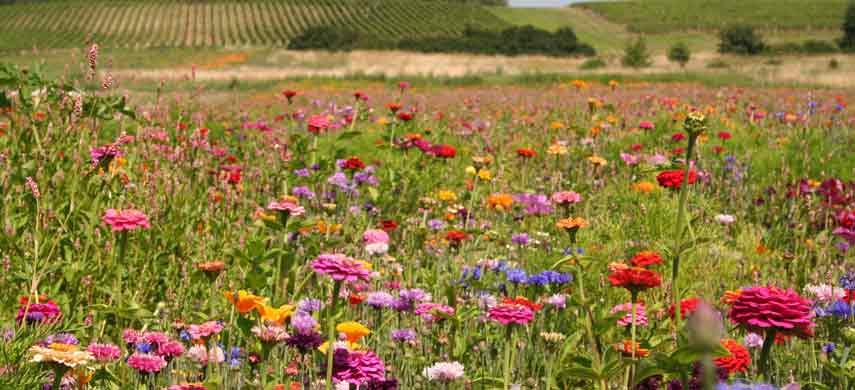 Виды газонов и их назначение фото 5