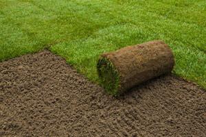 Как и когда нужно засевать газон фото 1