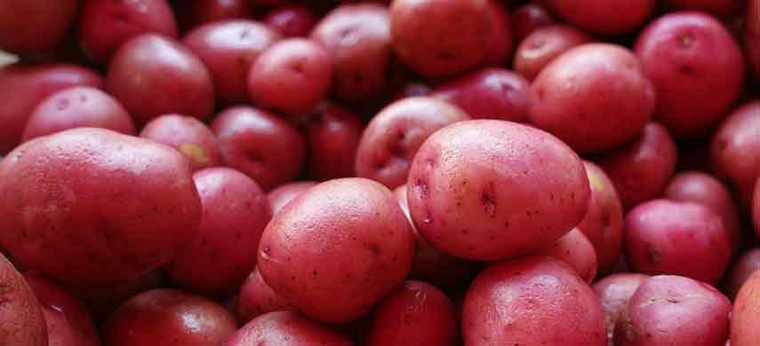 описание, фото и характеристика ранних сортов картофеля фото 6