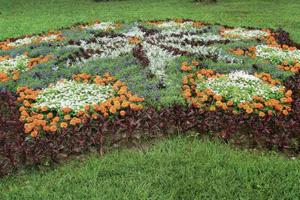 Виды цветников фото 3