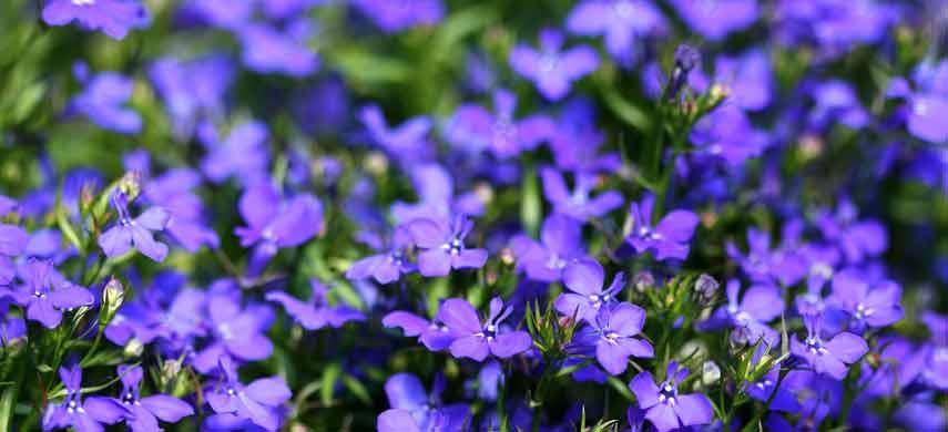 ампельные растения для сада фото 4