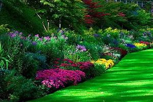 Виды цветников фото 5