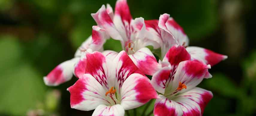 ампельные растения для сада фото 3