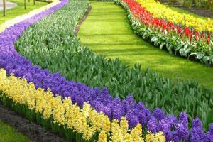 Виды цветниковфото 6