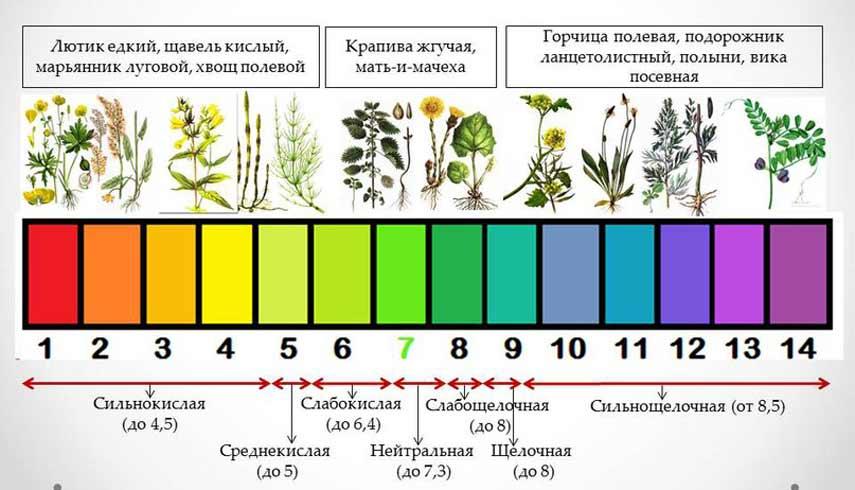 Таблица растений индикаторов почвы