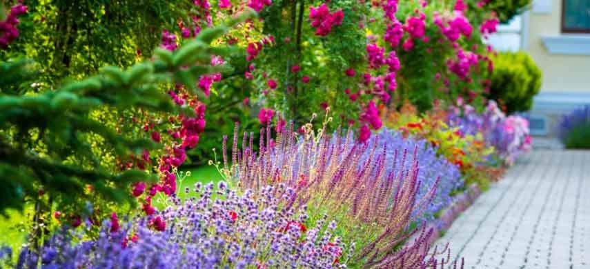 розы и лаванда