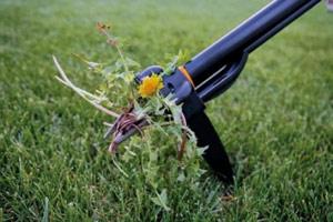 обрезка газона фото 3