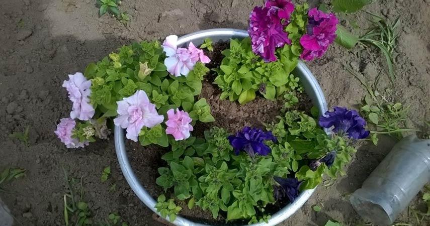 Цветы Алеси Парфенович фото1