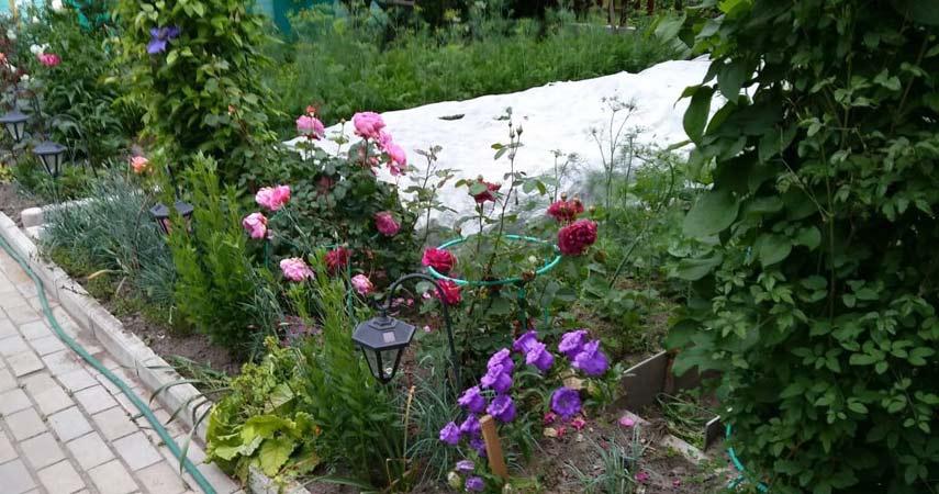 Цветы Алеси Парфенович фото 2