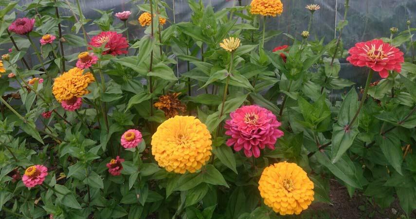 Цветы Алеси Парфенович фото3