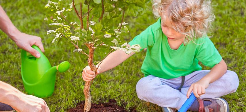 фото посадки деревьев