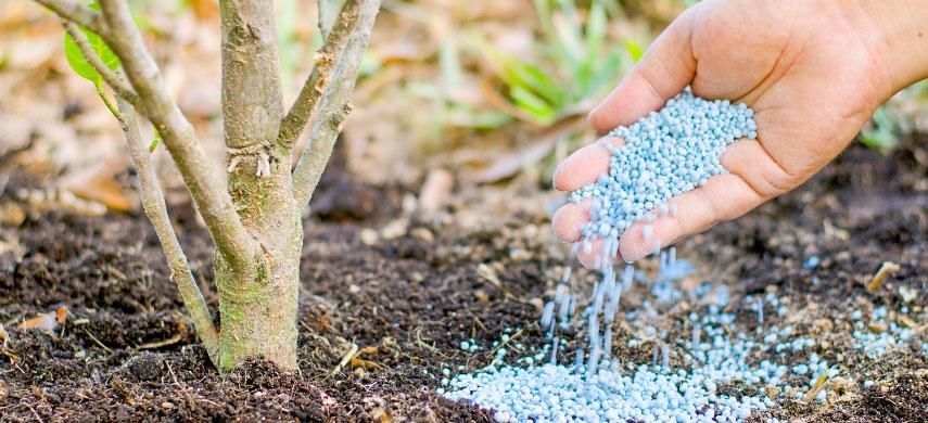 деревья и удобрения