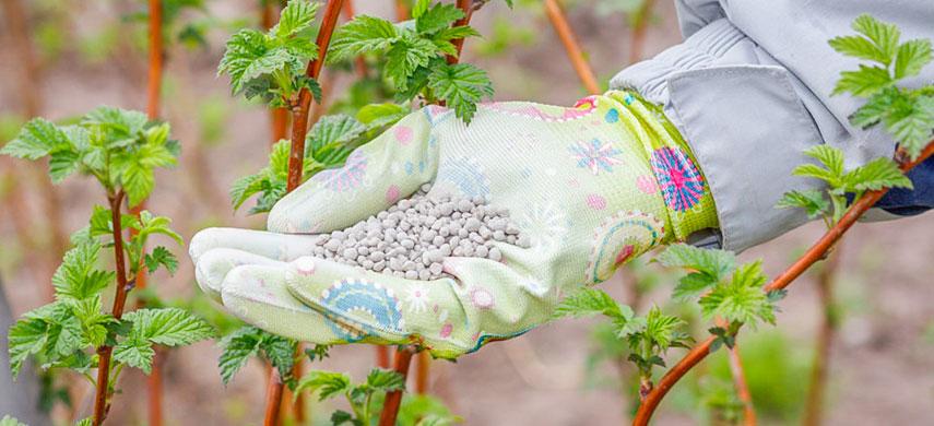 ягодники и удобрения