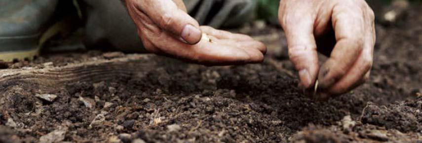 посев огурцов